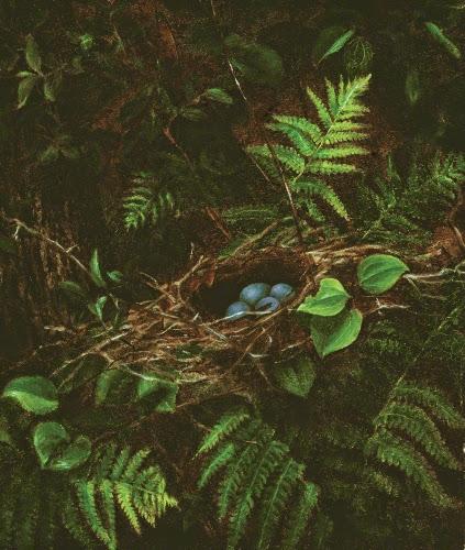 Fidelia Bridges (1834–1923, US), Bird's Nest and Ferns, 1863.