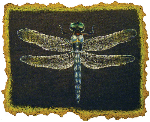 Student art from Insects & Torn Edges, a Middle School art lesson
